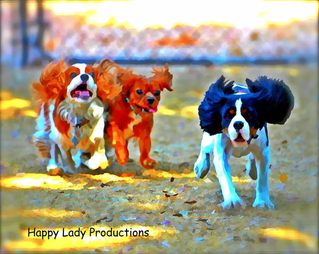 Lady, Lucy and Happy... Unleashed in Phoenix!