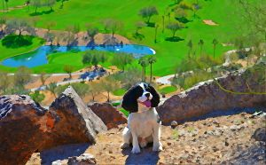 Lady's brother, Happy, enjoying the view of The Phoenician's golf course from Camelback Mountain.