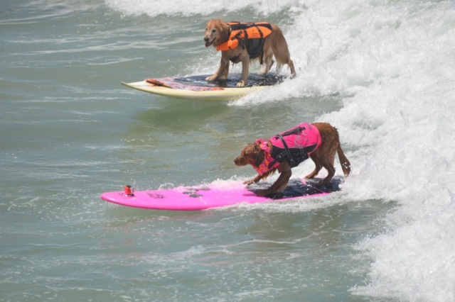 Double Trouble: Surfing dogs in San Diego