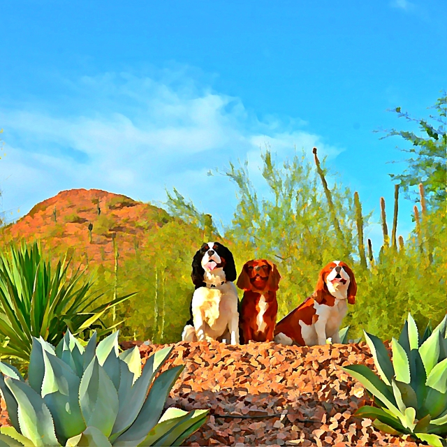 Happy, Lucy and Lady enjoy the views at the Desert Botanical Gardens during Dogs' Day at the Garden.