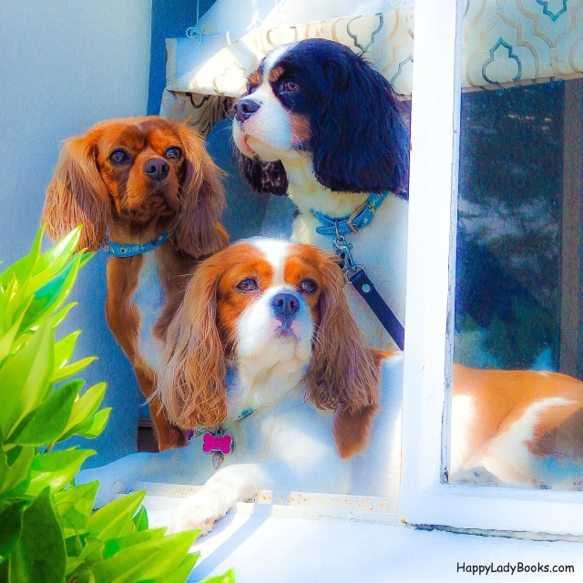 Lucy, Happy and Lady enjoy watching passersby from their window perch at The Cypress Inn.